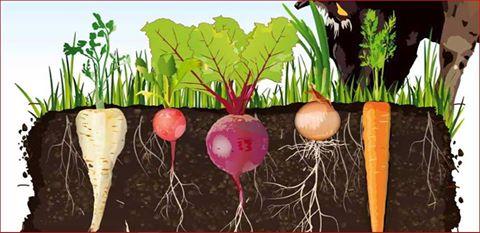 L'Orto Bioattivo per produrre ortaggi più nutrienti e migliorare la fertilità della terra.