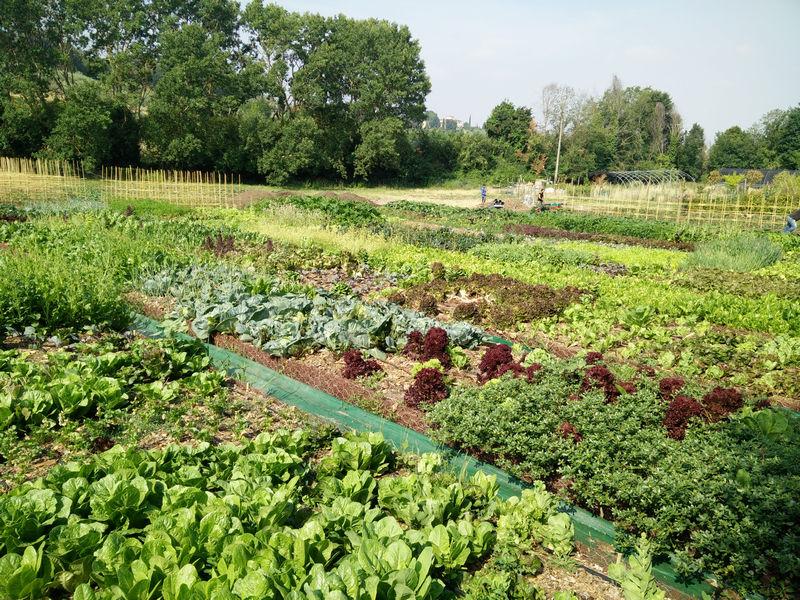 La rivoluzione passa per l'orto. Il futuro sono le tecniche agricole non invasive e sostenibili.